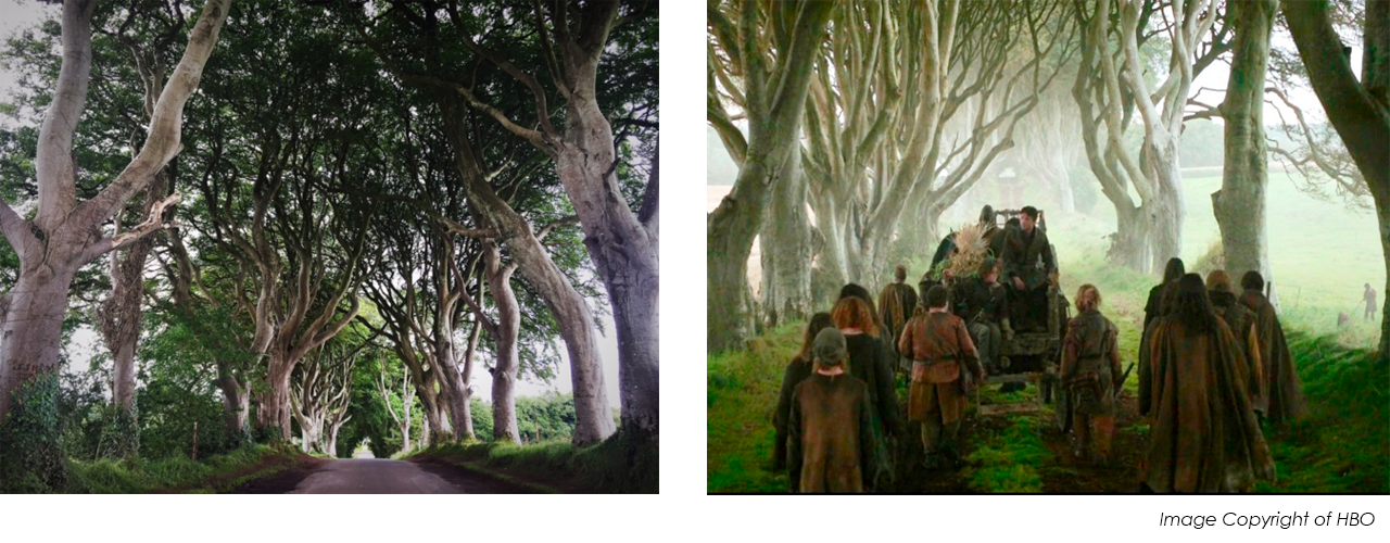 The Dark Hedges Game of Thrones Kings Road